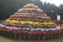 Chrysanthemum Show 3