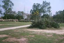 कैक्टस पार्क 4